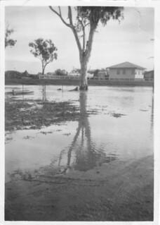1950 Goondiwindi Flood - image 6