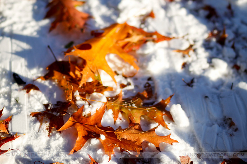 fallen oak leaves in snow