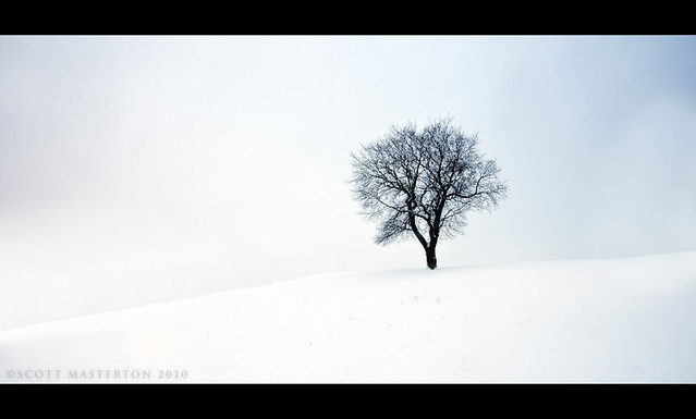 5227115384 52f5ee1193 z [Pics] Flickr Spotlight – Lonely Trees