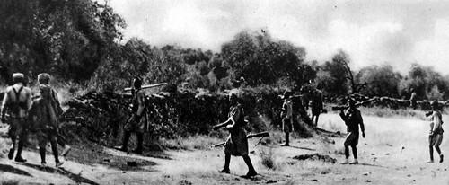 Regulares avanzando entre olivos
