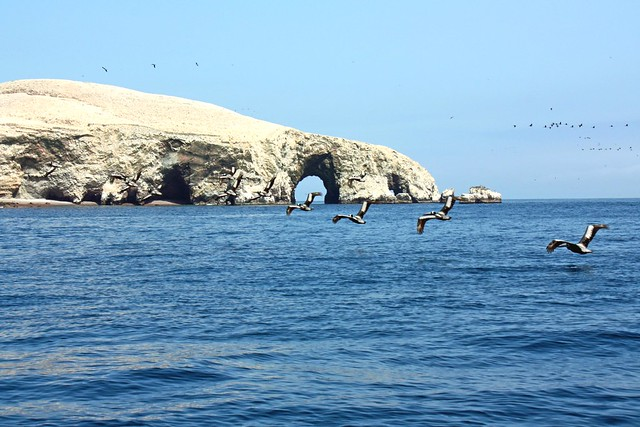 Islas Ballestas nature