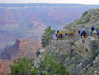 NPS Approves Stock Use Plan for Grand Canyon South Rim