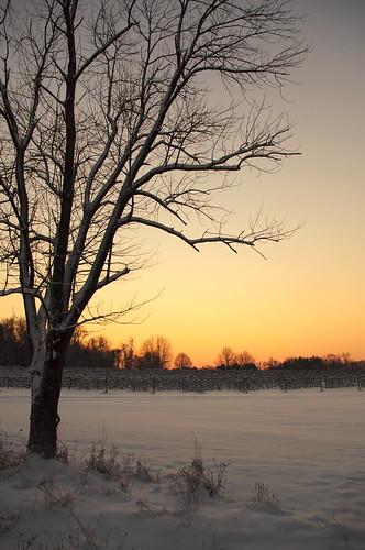 sunrise snowstorm princeton