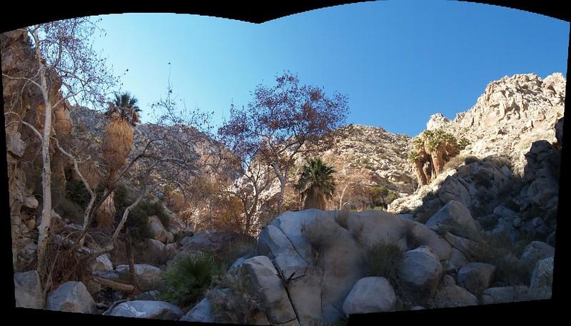 Cougar Canyon oasis panorama