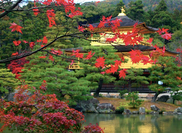 Kinkaku-ji in Autumn:金閣寺
