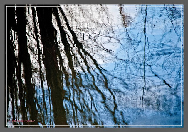Westvale Pond Reflections #3