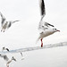 Birds over Geneva by Ana Santos
