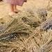 Naramata feet