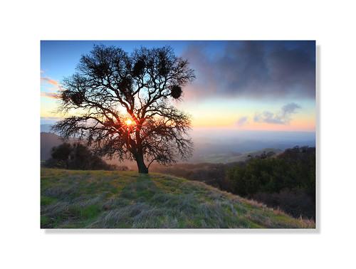 california sunset usa mountain tree clouds oak danville bayarea mtdiablo hillside sunstar canon5dmarkii