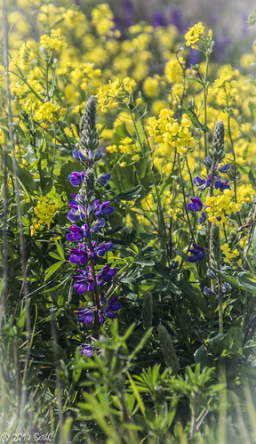94-365 Marsh Wildflowers