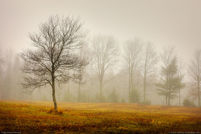 Foggy Morning in Maine Field