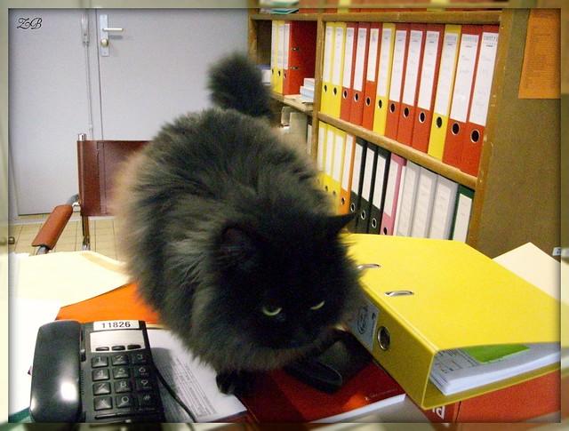 Le nouveau secrétaire de l'UFR - The office's new secretary