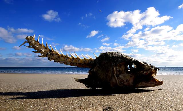 Fish head fish head flickr photo sharing for Fish head app