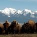 Photos of Bison on the National Bison Range
