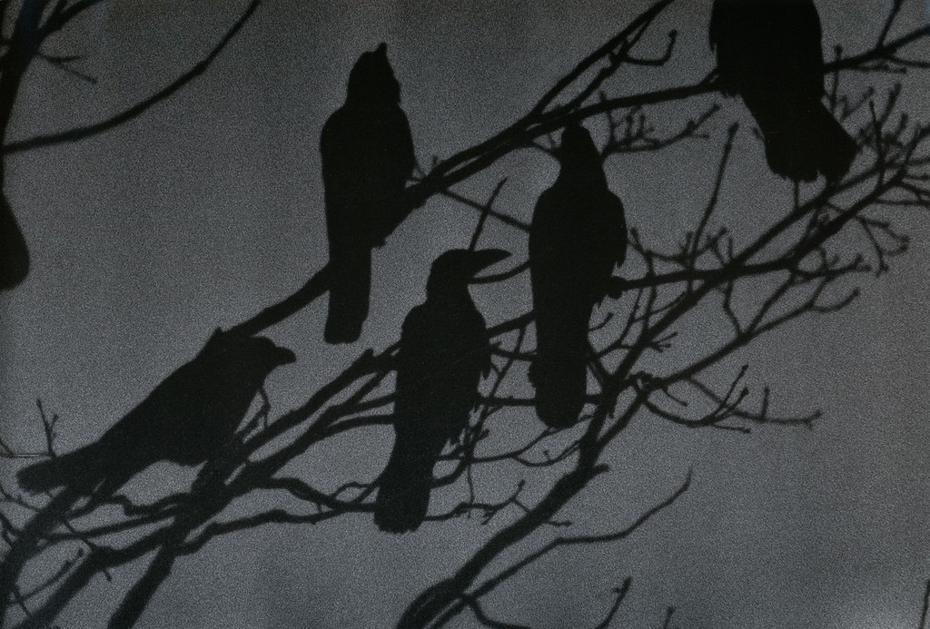 Nayoro 1976, from 'The Solitude of Ravens,' by Masahisa Fukase