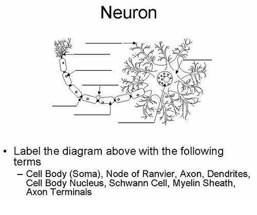 diagram of a neuron diagram free engine image for user manual download. Black Bedroom Furniture Sets. Home Design Ideas