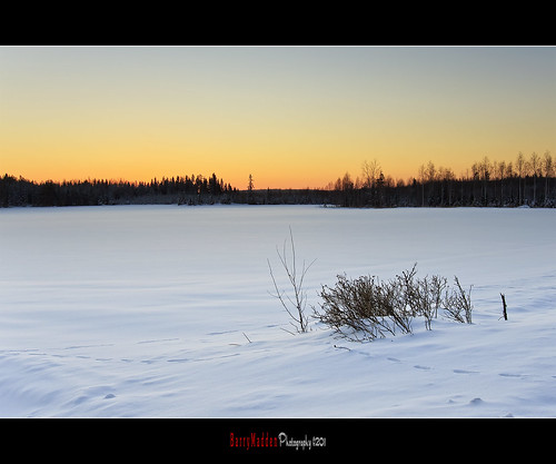 trees winter sunset sky sun snow cold field forest suomi finland landscape countryside afternoon freezing explore talvi lappeenranta