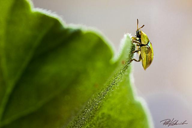 Small Bug, named John Doe