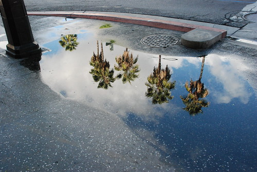 Hollywood After Rain