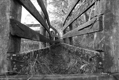 bw cliff gum waterfall sheep farm australia nsw rugged corral eborfalls sheeprun guyfawkesriver 2010roadtrip