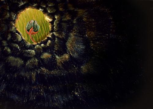 Ilustración: una flor que no termina de abrirse vista desde un agujero