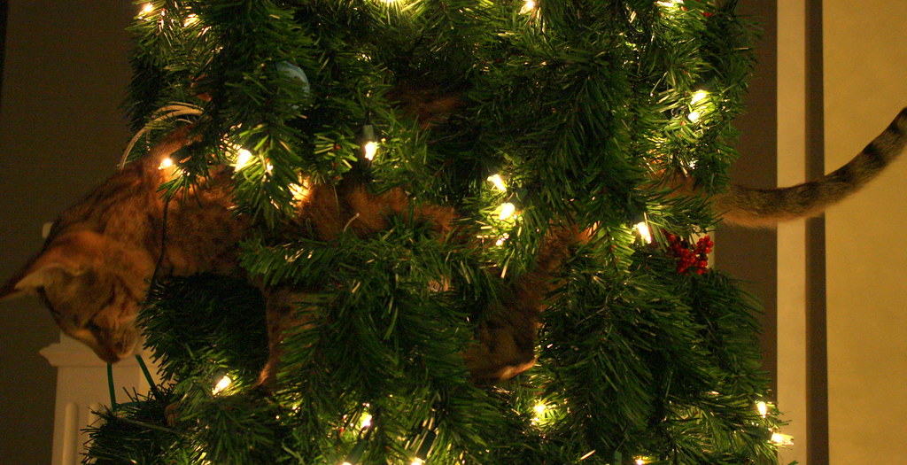 Shark head to tail in the Christmas tree