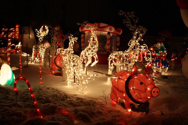 House #5 Holiday Lights, flying pig lights 2010