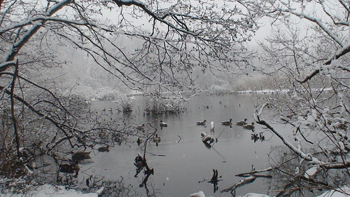 DSC00619 Winter At Van Cortlandt Park Bronx , New York