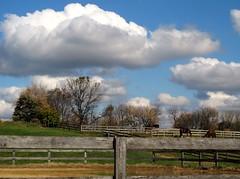 Rural pics: Farms, Barns & Horses