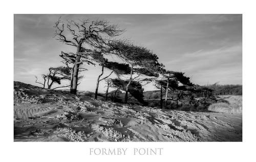 Trees on dunes at Formby Point