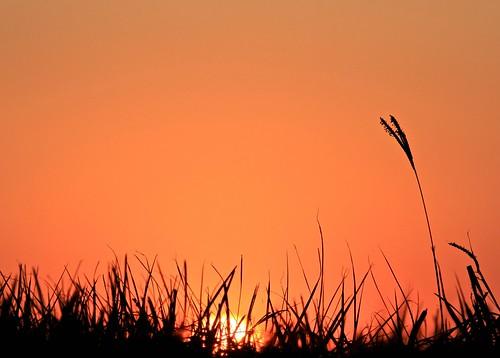 sunset louisiana unitedstatesofamerica sunsets clear batonrouge mississippiriver davidkeith banksofthemississippi digitalagent kenyuel brucebordelon curitsyuel gedelacrus gaylonkeeling