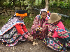 Thu, 12/01/2006 - 10:15 - Farmers sharing potatoes in the Potato Park, Peru