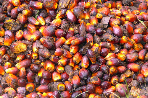 RAN's Rainforest Agribusiness Team Investigates Palm Oil Controversy in Indonesia