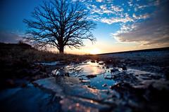 Burr Oak Ice