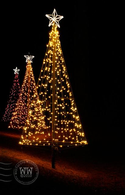 Christmas Tree Flickr Photo Sharing