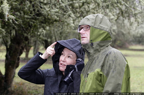 neeta & jeff looking at hawthorn trees, full of lichen & moss