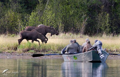 mooseboat1