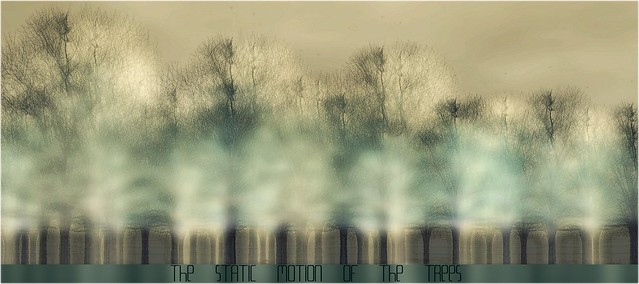 """the static motion of the trees"""
