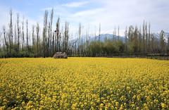 Kashmir April 2011