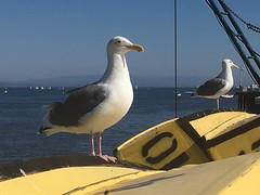 Seagulls and Boats