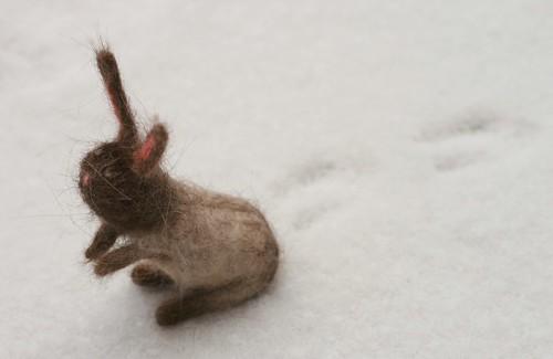 Timmy Bunny
