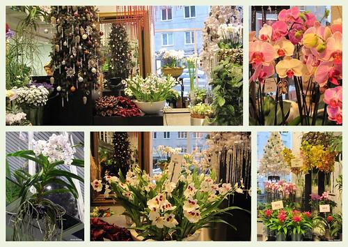 A florist's shop in Helsinki, Töölö by Anna Amnell
