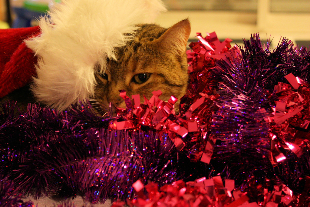 Noël des chats