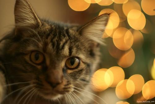 Cat's Christmas