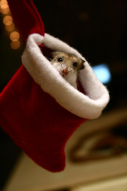 M.C. Hamster!