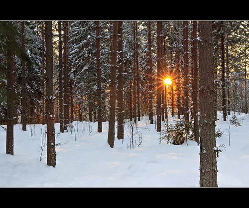 trees sun snow forest suomi finland landscape countryside explore talvi lappeenranta sunflare