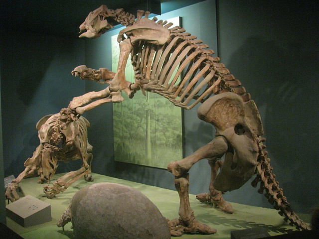 Giant Ground Sloths These Have Always Been Among My
