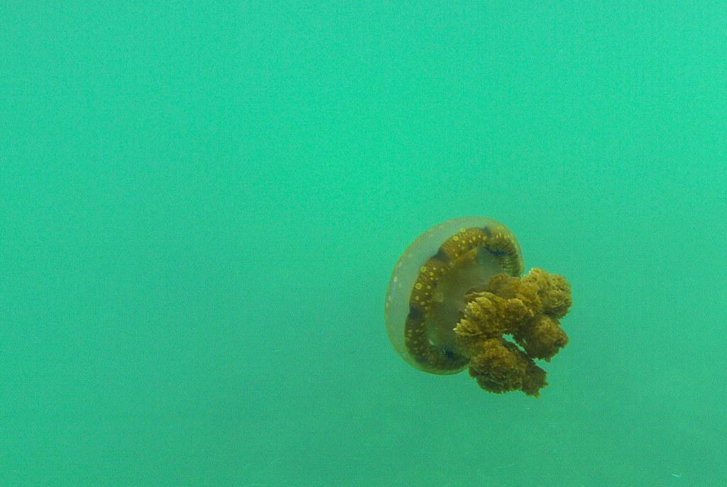 Siargao, Surigao del Norte, Surfing, Cloud 9, Surfer, Waves, Jellyfish Lagoon, Sohoton Lagoon