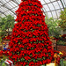 Poinsettia Tree too