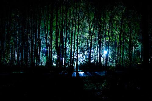 lighting trees shadow tree green set night forest dark lights unitedstates southcarolina eerie filmset scad fahrenheit451 hmi savannahcollegeofartanddesign hardeeville telfairplantation
